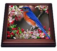 """フローレン鳥–美しいブルーバードN Cherry Blossoms–五徳 8 by 8"""" ブラウン trv_55179_1"""