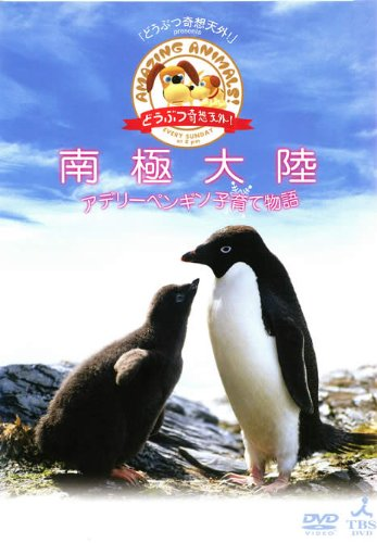 どうぶつ奇想天外! presents 南極大陸・アデリーペンギン物語