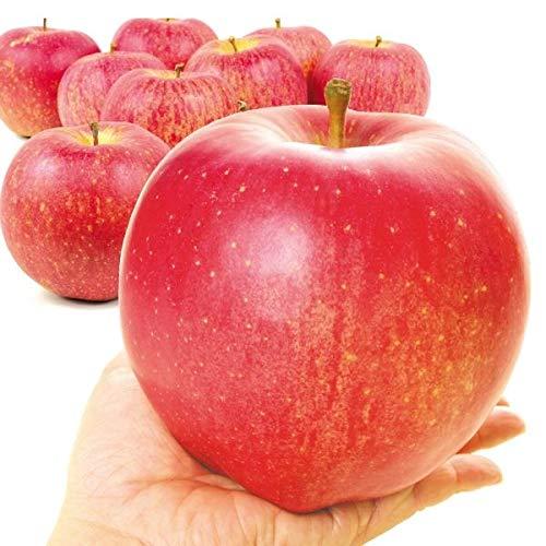 国華園 青森産 世界一 20kg1箱 木箱 りんご