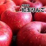 【予約商品】10月中旬以降発送予定 長野県産 紅玉りんご 訳あり 約5kg 果物