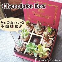 多肉 チョコレートボックス 多肉植物 詰め合わせ