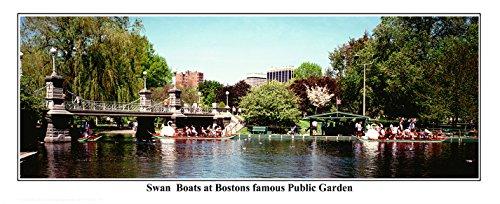 米国マサチューセッツ州、ボストンCity、ビューのボストン共通スワンボート–パノラマフォト# 6006