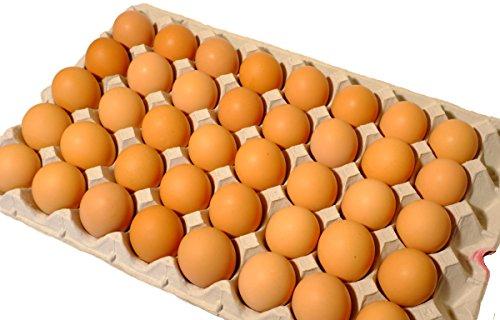 訳あり たまご 北海道発、平飼いで育てた純国産鶏の有精卵 10kg(1個あたり約26円)