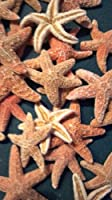 Brown Sugar Starfish 2- 3 Set of 6 by Pelican