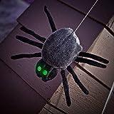 Dropping Dan Spider (Standard) by Sunstar Industries [並行輸入品]