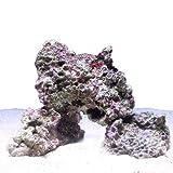 (海水魚)ライブロック Sサイズ(1kg)(形状お任せ) 本州・四国限定[生体]