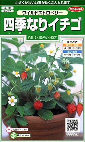 サカタのタネ 実咲花6082 四季なりイチゴワイルドストロベリー 00906...