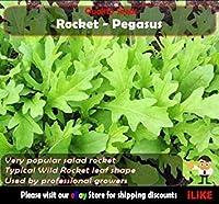 ロケットペガサス200個の種子最小野菜園芸植物。見事なロケットタイプ