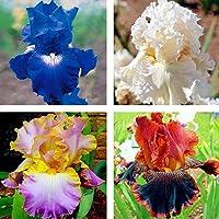 種子:01:アイリス種子盆栽レア多年生の花の種50個/袋ホームガーデン工場