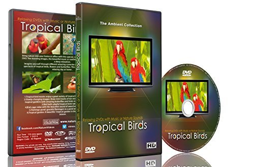 Relaxation DVD - Tropical Birds with Music or Nature Sound by Tropical Birds From Sunrise to Sunset