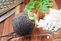 Black Radish Murzynka Seeds - Raphanus sativus - 1000 Seeds