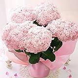 BunBunBee 母の日 アジサイ鉢・まあるい「てまりてまり・ピンク」 2019
