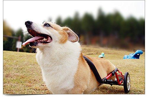 PaletteLife パレットライフ 犬用車椅子 ドッグウ...