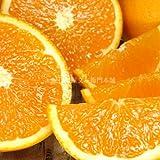 和歌山 有田産 清見オレンジ 5kg わけあり柑橘 ご家庭用 紀州和歌山有田みかんの里から