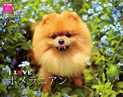 I LOVE ポメラニアンカレンダー2017 壁掛け ([カレンダー])