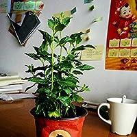 損失振興!!! 30種/中海唐バルコニーLIG鉢植えの種をぶら下げバッグランタン種子