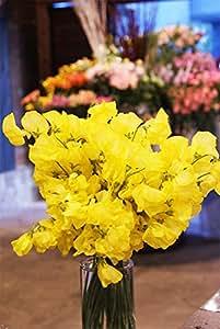 箱買い 一級品のスイートピー(黄色系) 誕生日・記念日・卒業・送別・各種お祝い