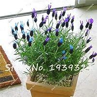 !100ピース/ロットラベンダーの種、美しい花の種、非常に香り高い、家の庭の植わることのためのラベンダー植物