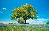 ムスカリの花、木、春、草、青空 キャンバスの 写真 ポスター 印刷 旅行 風景 景色 - (50cmx33cm)