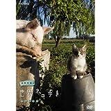 岩合光昭の世界ネコ歩き ウルグアイ DVD【NHKスクエア限定商品】
