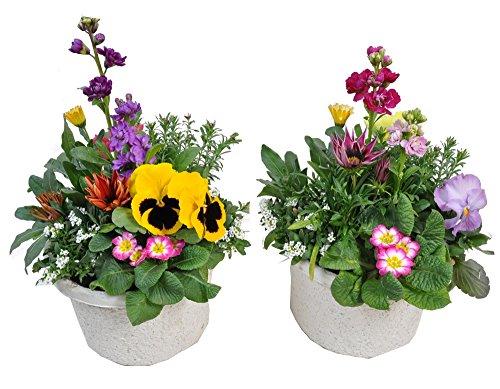 【お買い得商品】季節の鉢植え エコポット(7号鉢) 【2個セット】