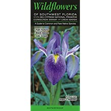 Wildflowers of Southwest Florida including Big Cypress NP, Corkscrew Swamp & CREW Marsh: A Guide to Common & Rare Native Species