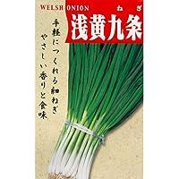 ネギ 種 【 浅黄系九条 】 種子 小袋(約15ml)