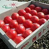 JA全農ちば 長生(ながいき)トマト (4kg)