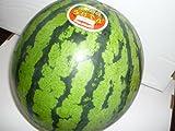 北海道共和町産 訳あり 特大らいでんすいか 優品1玉入(1玉7kg以上 3L以上)