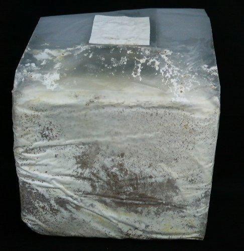 菌糸ブロック YSO−3500ccオオヒラタケ(クヌギ100%)