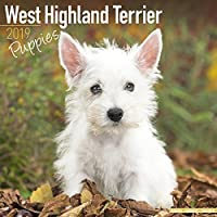West Highland Terrier Puppies Calendar 2019