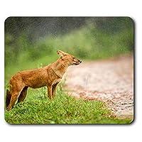 快適なマウスマット - かわいいモンスーンドールフォックス犬コンピュータ&ノートパソコン、オフィス、ギフト、ノンスリップベースのため23.5 X 19.6センチメートル(9.3 X 7.7インチ) - RM3480