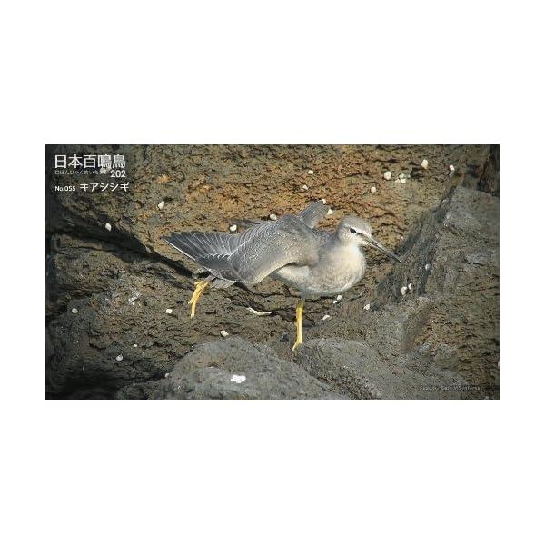 シンフォレストBlu-ray 日本百鳴鳥 2...の紹介画像13