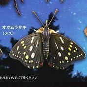カプセルQミュージアム 樹液に集まる昆虫 真夏の夜の宴 [4.オオムラサキ(メス)](単品)