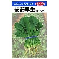 安藤早生 みかど協和の小松菜種です