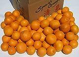 完熟とろとろ清見オレンジ♪ 10kg 【和歌山県産】 (L・M・S・2Sサイズ混合)