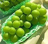 シャインマスカット 白葡萄 約900g 2房 山梨県・長野県産 秀品規格 種無し・大粒の贈答ぶどう!TVでも話題のギフトフルーツ