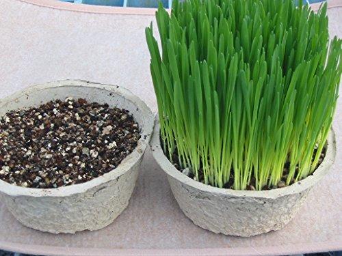 農場直送!猫の必需品 そのまんま猫の草 2鉢セット(すぐに食べられる猫の生野菜)