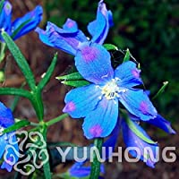デルフィニウムGrandiflorum FlowerBonsai庭が速く 盆栽DIY家庭菜園 グロウ50カット花:2