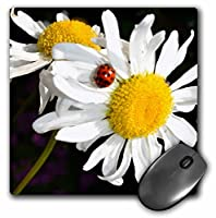 3drose LLC 8x 8x 0.25インチデイジーwith aてんとう虫マウスパッド( MP _ 22685_ 1)