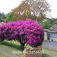 庭の植物盆栽で庭のための100個のブーゲンビリアの種子花の種子は、10ローズギフト盆栽種子を取得2を購入します