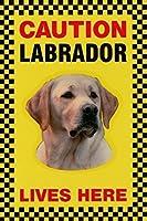 CAUTION LABRADOR LIVES HERE サインボート:ラブラドール 写真 画像 英語 看板 Made in U.K [並行輸入品]