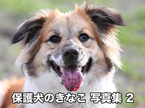 保護犬のきなこ 写真集2 (「保護犬のわんこ」プロジェクト)