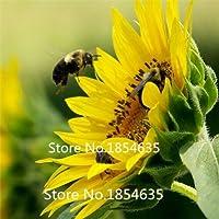 緑:園芸植物Portulaca Grandiflora、オリオールヒマワリ、黄色いサンプラント、マツ針花の種100個の粒子盆栽の種