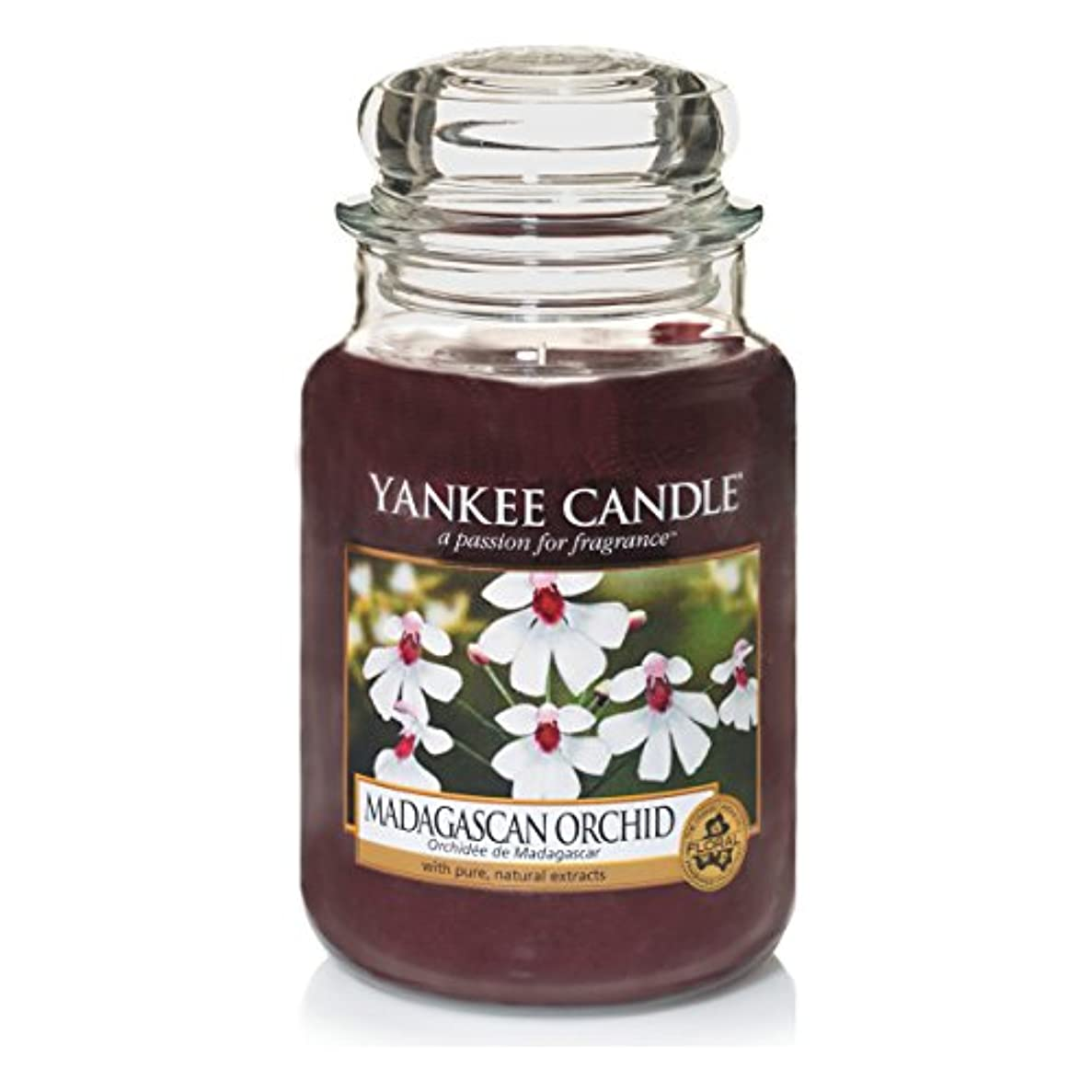 はい何よりもエンディングYankee Candle Large Jar Candle, Madagascan Orchid by Yankee Candle