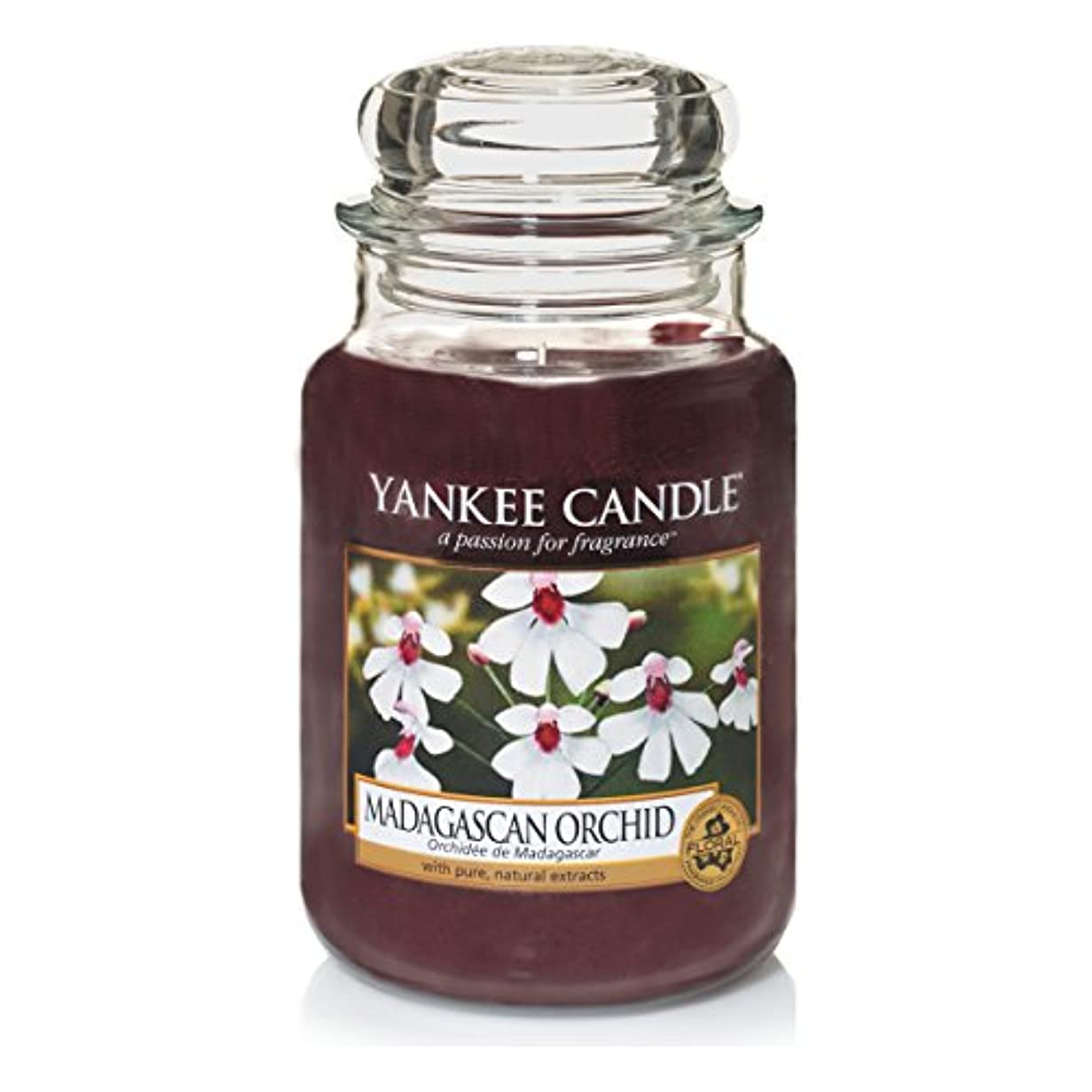 ビジターファイナンスメールを書くYankee Candle Large Jar Candle, Madagascan Orchid by Yankee Candle