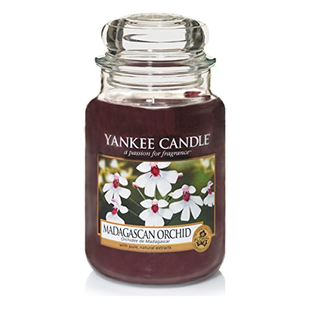 市民物理的に証明書Yankee Candle Large Jar Candle, Madagascan Orchid by Yankee Candle