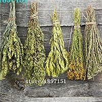 :ビッグセール100seeds /バッグチュベローズの花の種は、バニラ種子花の種20の快適な種子干ばつを鉢植え