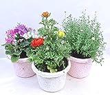 数量限定【紙の鉢・エコポット】季節の3種類(5号鉢) 【3個セット】 お手持ちの鉢に簡単に植え変えも可能! お花の種類・お色はお選びいただけません。