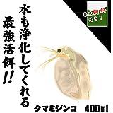 ( オススメ)タマミジンコ 400ml(100匹~)+ ミジンコ育成・増殖促進飼料10g [生体]